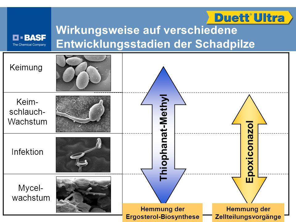 Keimung Keim- schlauch- Wachstum Infektion Mycel- wachstum Wirkungsweise auf verschiedene Entwicklungsstadien der Schadpilze Thiophanat-Methyl Epoxico