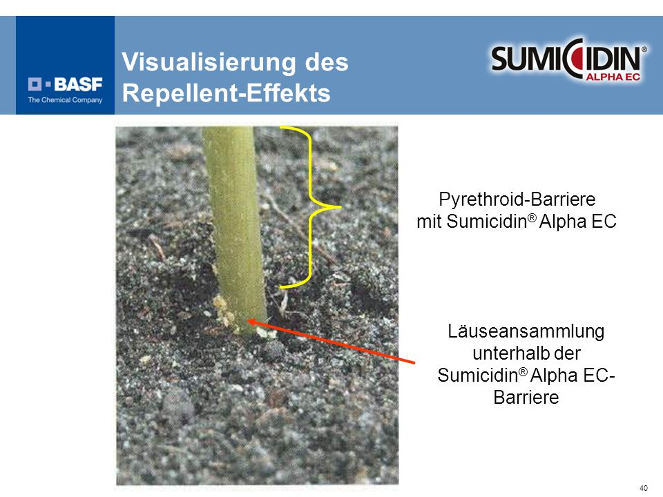 40 Visualisierung des Repellent-Effekts Läuseansammlung unterhalb der Sumicidin ® Alpha EC- Barriere Pyrethroid-Barriere mit Sumicidin ® Alpha EC