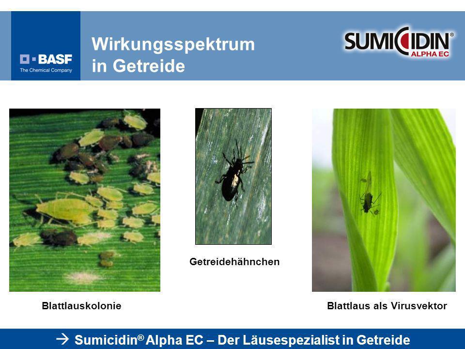 Getreidehähnchen BlattlauskolonieBlattlaus als Virusvektor Sumicidin ® Alpha EC – Der Läusespezialist in Getreide Wirkungsspektrum in Getreide