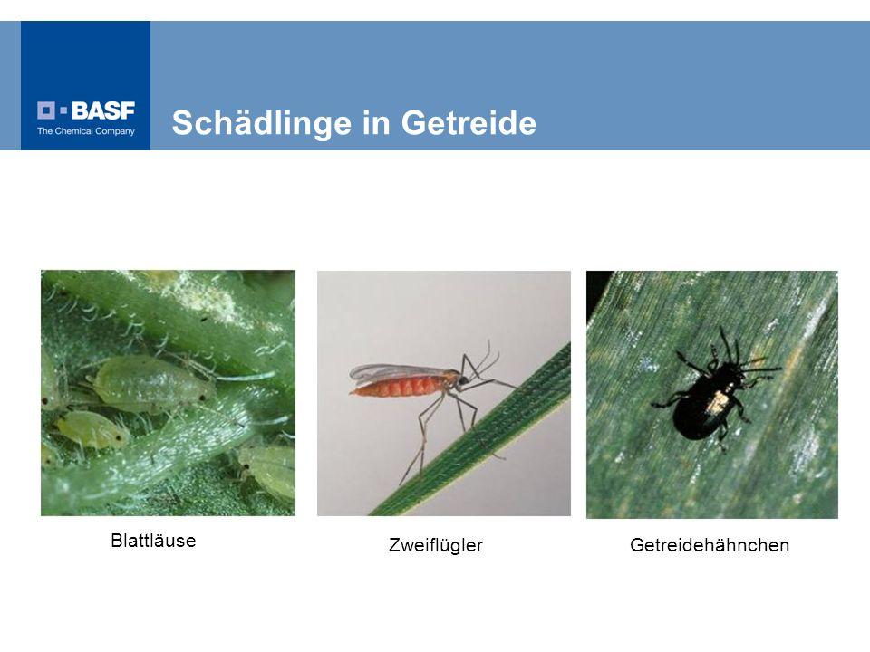 Blattläuse ZweiflüglerGetreidehähnchen Schädlinge in Getreide