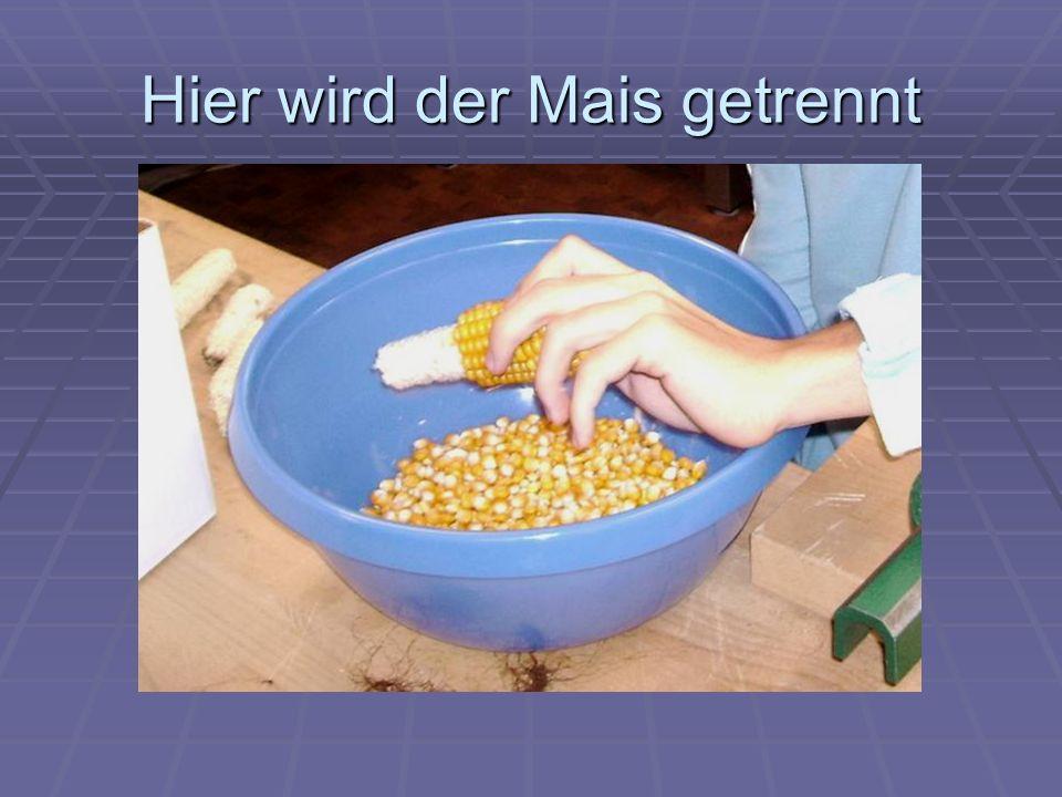 Hier wird der Mais getrennt