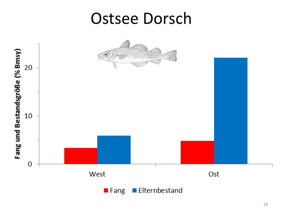 Ostsee Dorsch 18