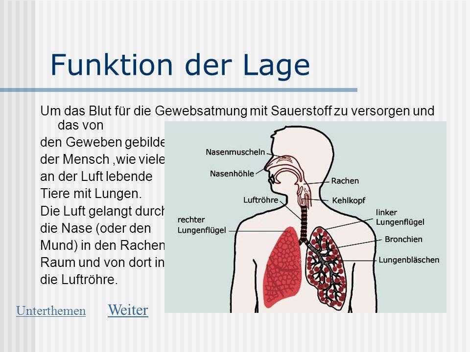Funktion der Lage Um das Blut für die Gewebsatmung mit Sauerstoff zu versorgen und das von den Geweben gebildete Kohlendioxid an die Luft abzugeben, a