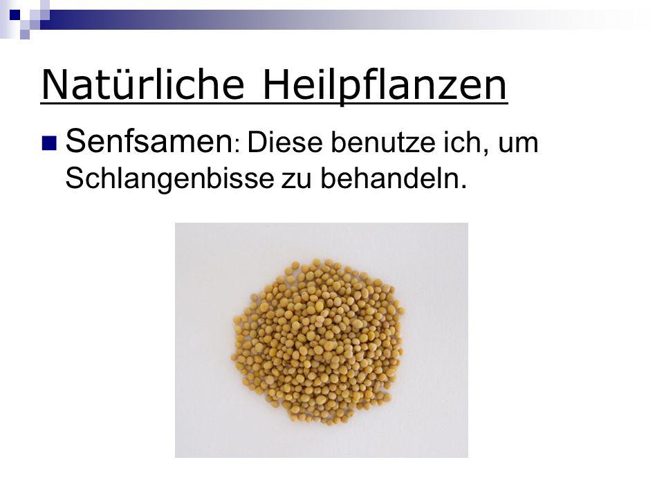 Natürliche Heilpflanzen Senfsamen : Diese benutze ich, um Schlangenbisse zu behandeln.