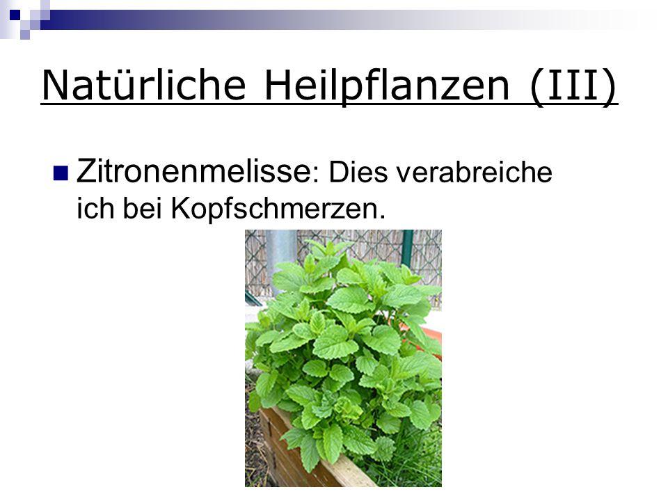 Natürliche Heilpflanzen (III) Zitronenmelisse : Dies verabreiche ich bei Kopfschmerzen.