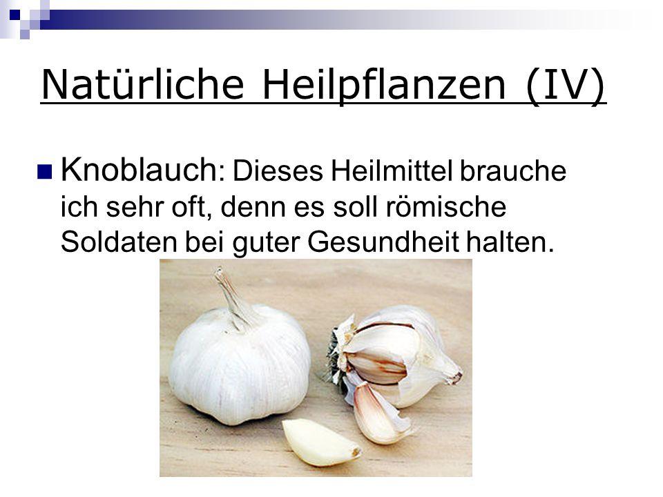 Natürliche Heilpflanzen (IV) Knoblauch : Dieses Heilmittel brauche ich sehr oft, denn es soll römische Soldaten bei guter Gesundheit halten.