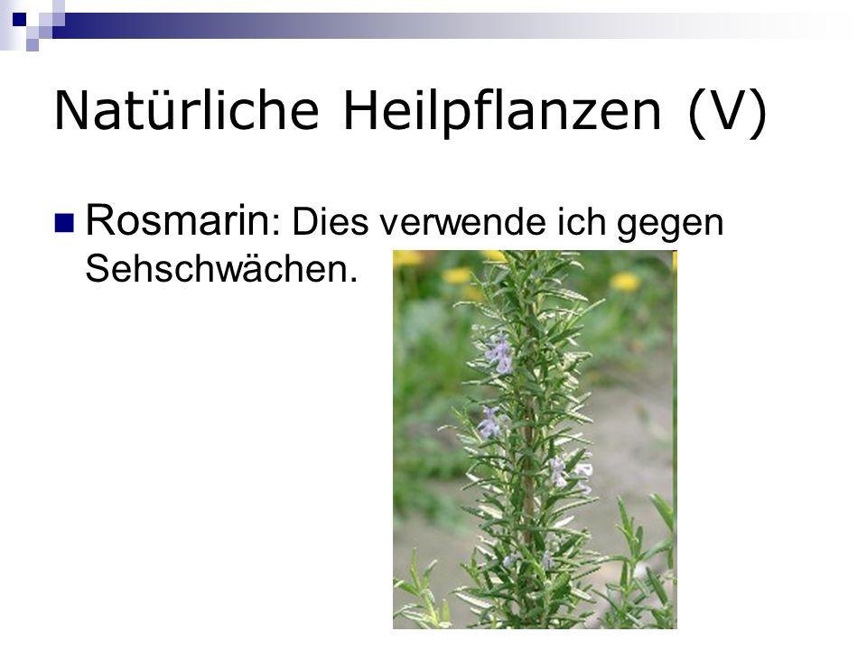 Natürliche Heilpflanzen (V) Rosmarin : Dies verwende ich gegen Sehschwächen.