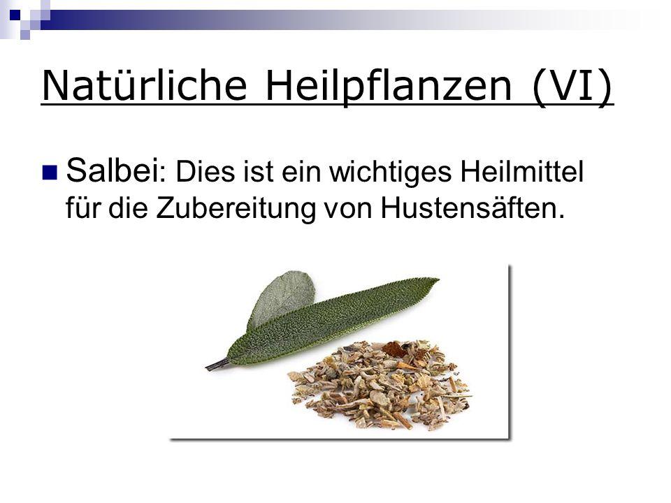 Natürliche Heilpflanzen (VI) Salbei : Dies ist ein wichtiges Heilmittel für die Zubereitung von Hustensäften.