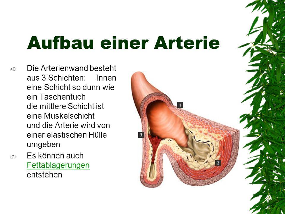 Aufbau einer Arterie Die Arterienwand besteht aus 3 Schichten: Innen eine Schicht so dünn wie ein Taschentuch die mittlere Schicht ist eine Muskelschi