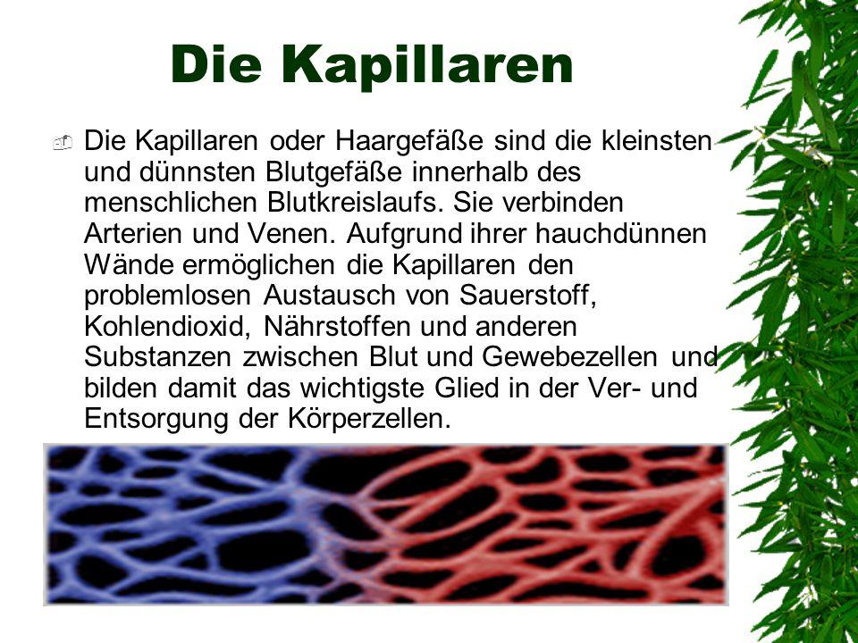 Die Kapillaren Die Kapillaren oder Haargefäße sind die kleinsten und dünnsten Blutgefäße innerhalb des menschlichen Blutkreislaufs. Sie verbinden Arte