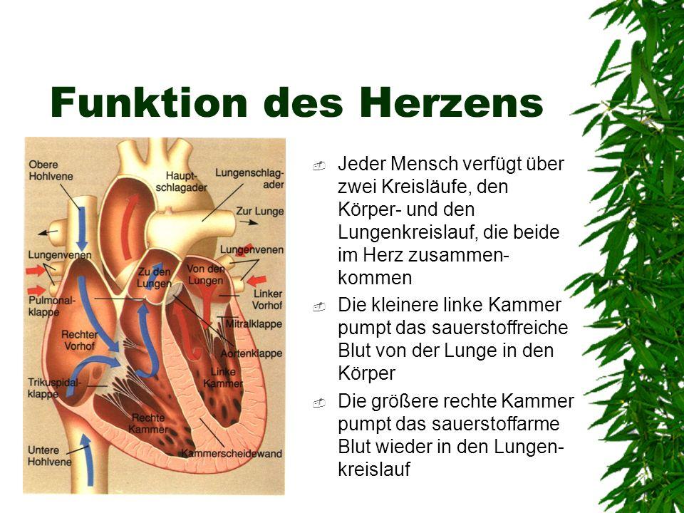 Funktion des Herzens Jeder Mensch verfügt über zwei Kreisläufe, den Körper- und den Lungenkreislauf, die beide im Herz zusammen- kommen Die kleinere l