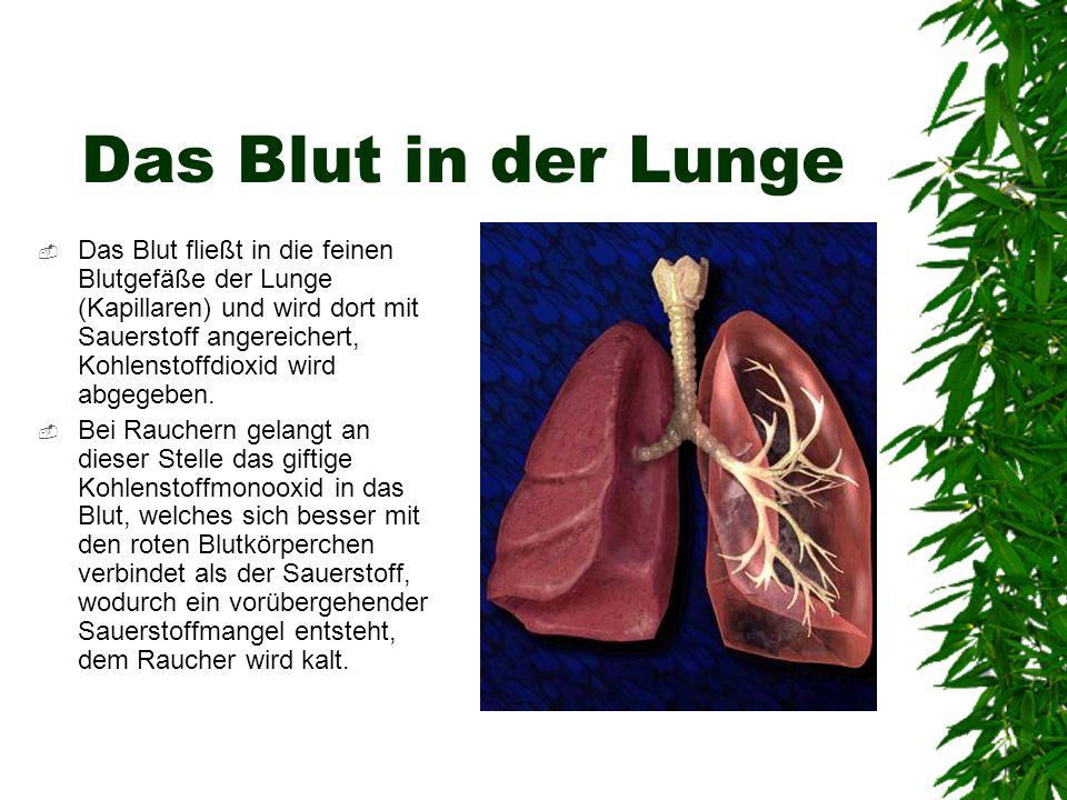 Das Blut in der Lunge Das Blut fließt in die feinen Blutgefäße der Lunge (Kapillaren) und wird dort mit Sauerstoff angereichert, Kohlenstoffdioxid wir