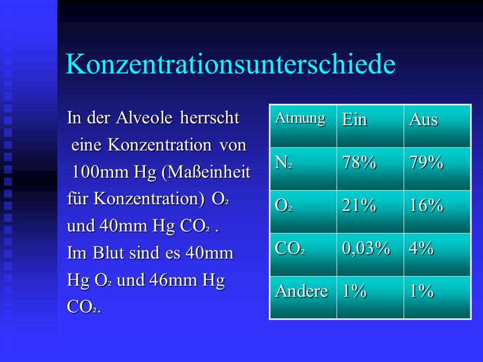 Der Gasaustausch - Die roten Blutkörperchen (O ² ) nehmen Sauerstoff auf und geben Kohlenstoffdioxid (CO ² ) ab - Der Gasaustausch wird durch die Konz