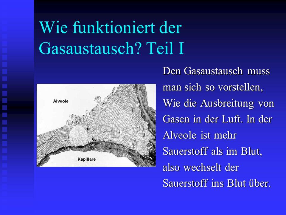 Konzentrationsunterschiede In der Alveole herrscht eine Konzentration von eine Konzentration von 100mm Hg (Maßeinheit 100mm Hg (Maßeinheit für Konzent