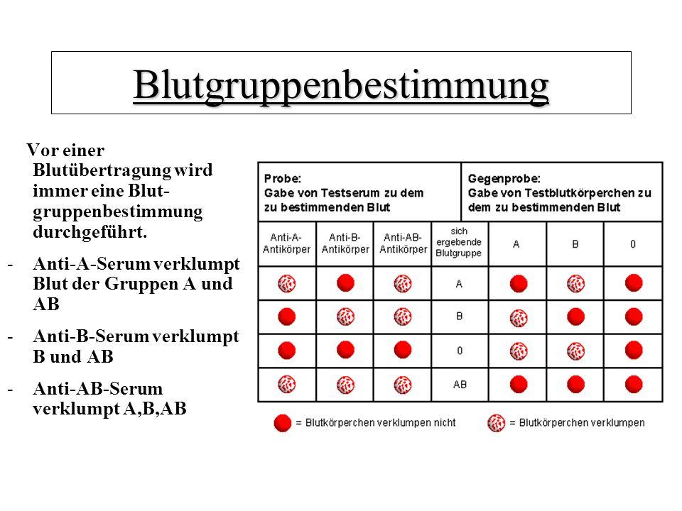 Blutgruppenbestimmung Vor einer Blutübertragung wird immer eine Blut- gruppenbestimmung durchgeführt. -Anti-A-Serum verklumpt Blut der Gruppen A und A