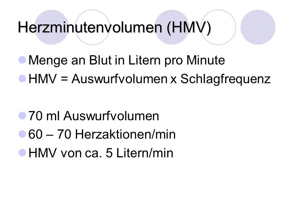 Herzminutenvolumen (HMV) Menge an Blut in Litern pro Minute HMV = Auswurfvolumen x Schlagfrequenz 70 ml Auswurfvolumen 60 – 70 Herzaktionen/min HMV vo