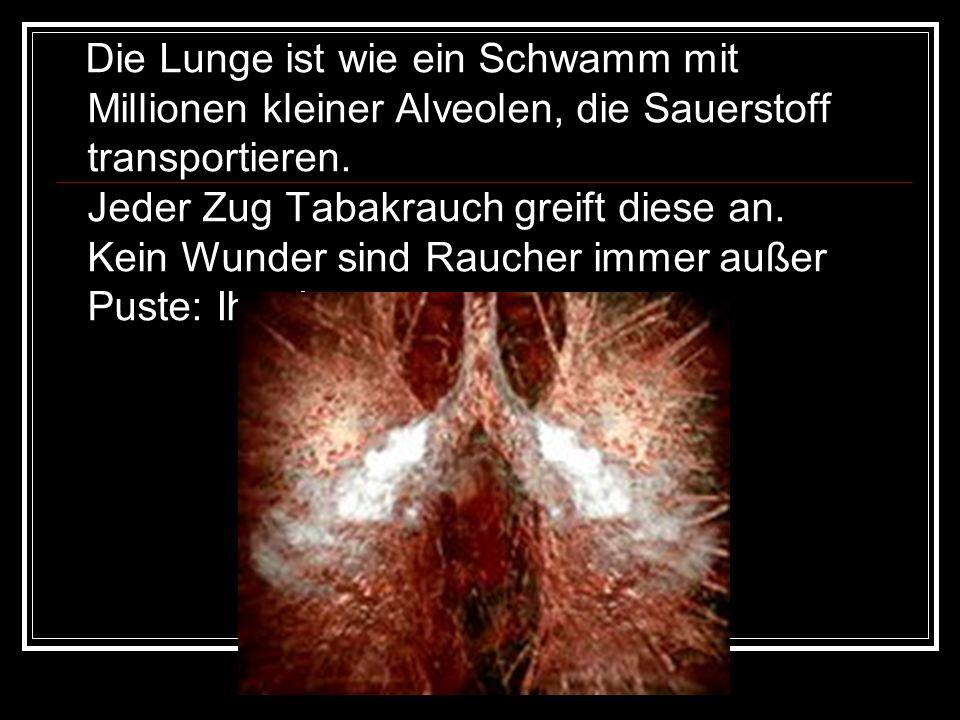 Die Lunge ist wie ein Schwamm mit Millionen kleiner Alveolen, die Sauerstoff transportieren. Jeder Zug Tabakrauch greift diese an. Kein Wunder sind Ra