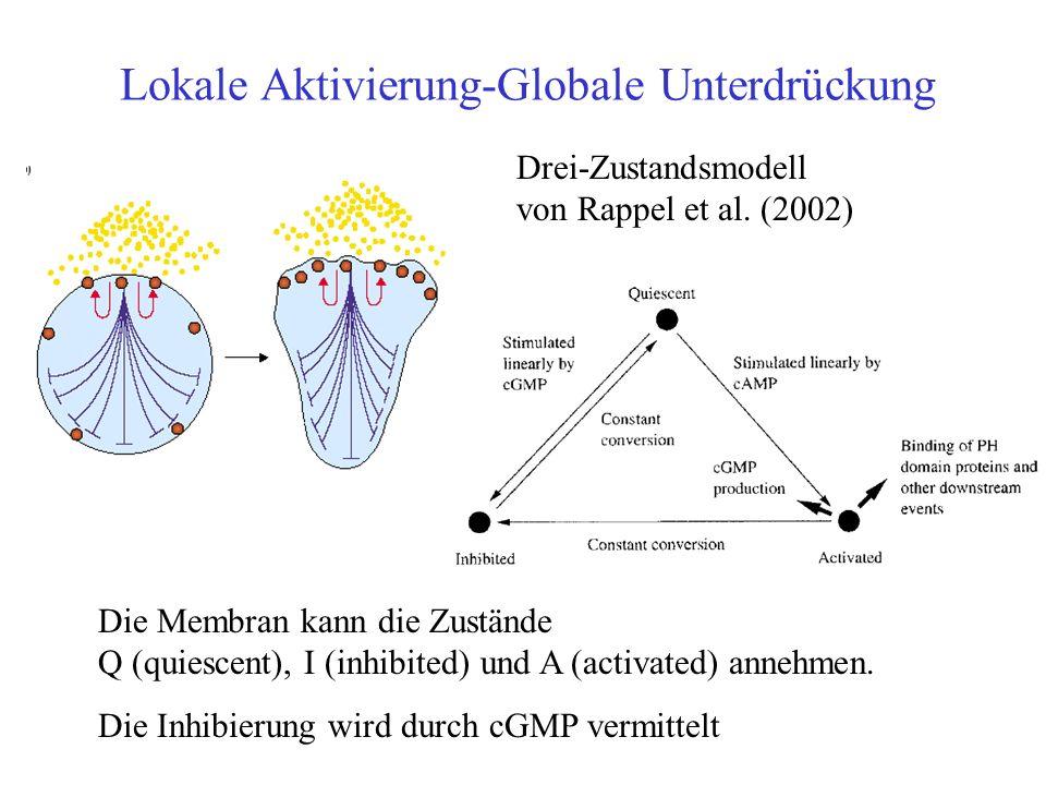 Lokale Aktivierung-Globale Unterdrückung Drei-Zustandsmodell von Rappel et al.