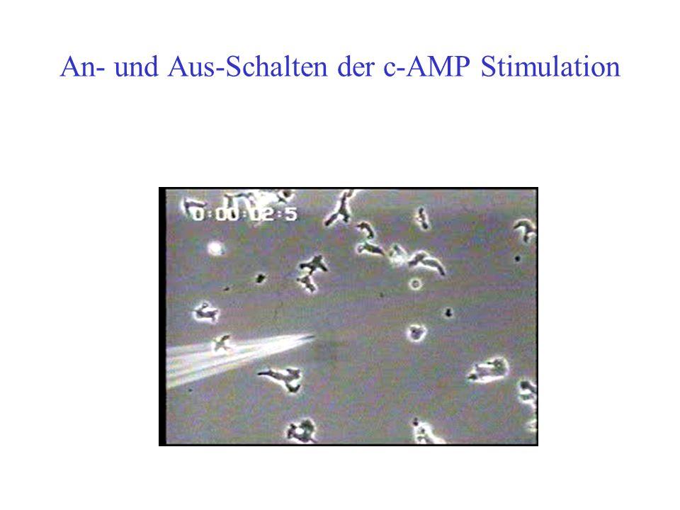 An- und Aus-Schalten der c-AMP Stimulation