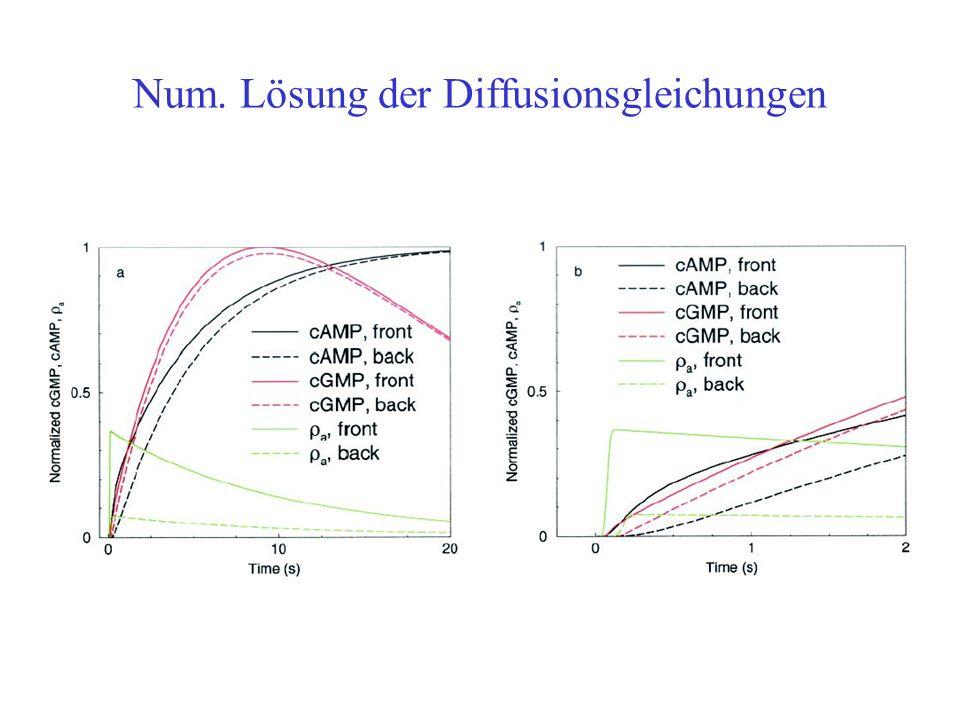 Num. Lösung der Diffusionsgleichungen