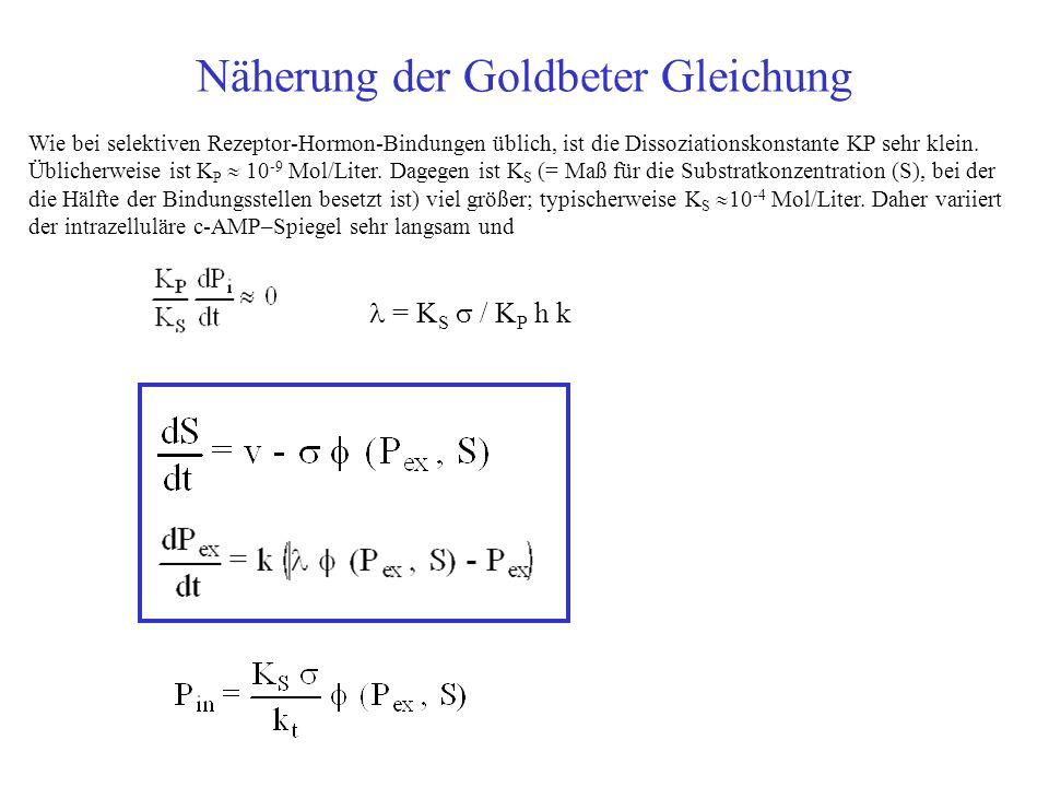 Näherung der Goldbeter Gleichung = K S / K P h k Wie bei selektiven Rezeptor-Hormon-Bindungen üblich, ist die Dissoziationskonstante KP sehr klein.