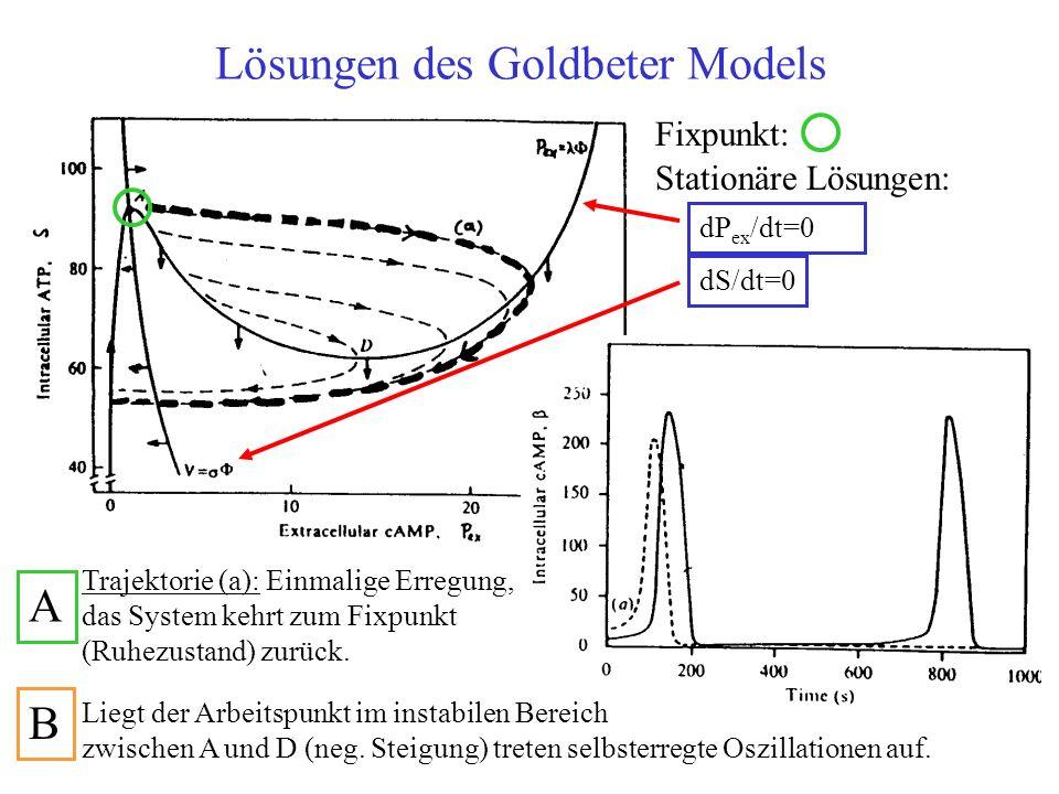 Lösungen des Goldbeter Models Stationäre Lösungen: dS/dt=0 dP ex /dt=0 Fixpunkt: Trajektorie (a): Einmalige Erregung, das System kehrt zum Fixpunkt (R