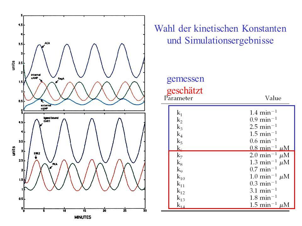 Wahl der kinetischen Konstanten und Simulationsergebnisse gemessen geschätzt