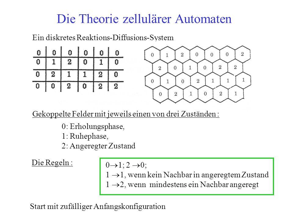Die Theorie zellulärer Automaten Gekoppelte Felder mit jeweils einen von drei Zuständen : 0: Erholungsphase, 1: Ruhephase, 2: Angeregter Zustand Ein diskretes Reaktions-Diffusions-System Die Regeln : Start mit zufälliger Anfangskonfiguration 0 1; 2 0; 1 1, wenn kein Nachbar in angeregtem Zustand 1 2, wenn mindestens ein Nachbar angeregt