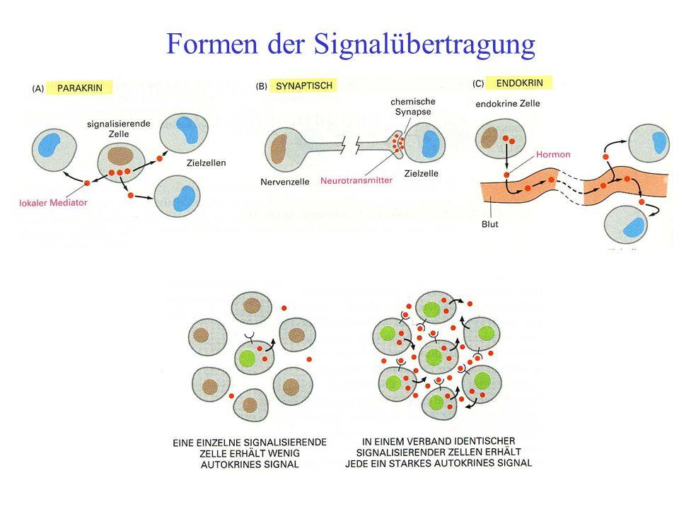 Modelle zur Erklärung von Chemotaxis Local excitation global inhibition