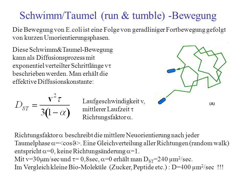 Schwimm/Taumel (run & tumble) -Bewegung Die Bewegung von E.coli ist eine Folge von geradliniger Fortbewegung gefolgt von kurzen Umorientierungsphasen.