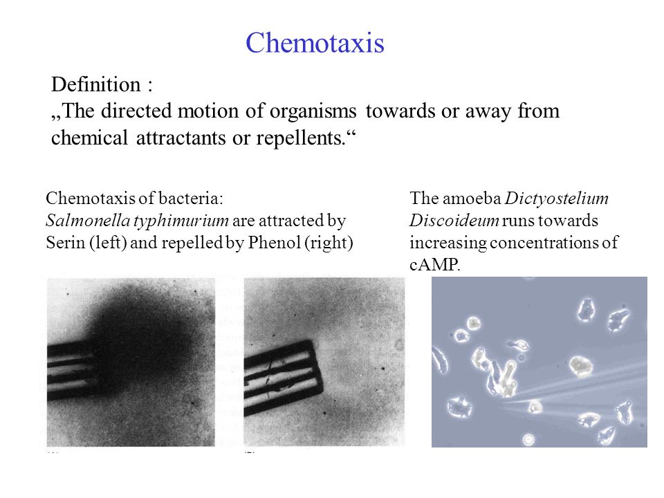 External Polymers in Bacteria Typically, two different External Polymers are found in Bacteria: o Bacteria can move with Pili by extending and retracting them inside the cell body (Type IV pilia).
