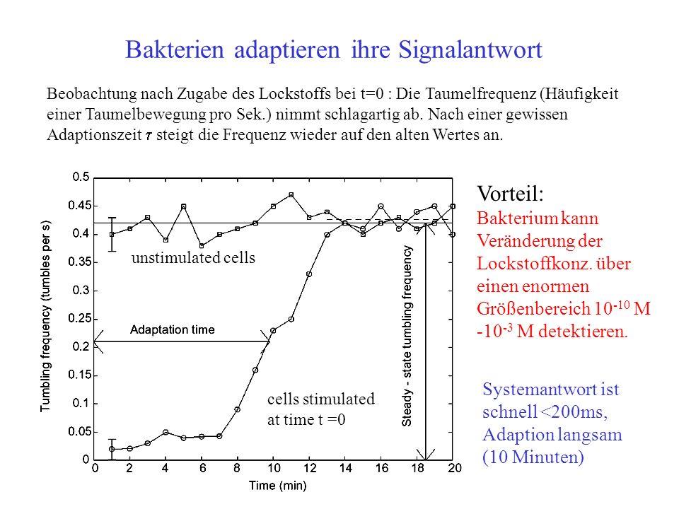 Bakterien adaptieren ihre Signalantwort Beobachtung nach Zugabe des Lockstoffs bei t=0 : Die Taumelfrequenz (Häufigkeit einer Taumelbewegung pro Sek.)