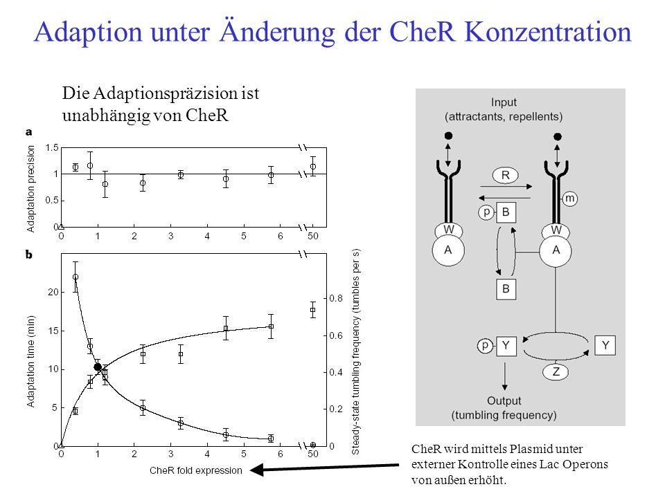 Adaption unter Änderung der CheR Konzentration Die Adaptionspräzision ist unabhängig von CheR CheR wird mittels Plasmid unter externer Kontrolle eines
