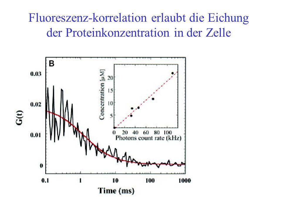 Fluoreszenz-korrelation erlaubt die Eichung der Proteinkonzentration in der Zelle