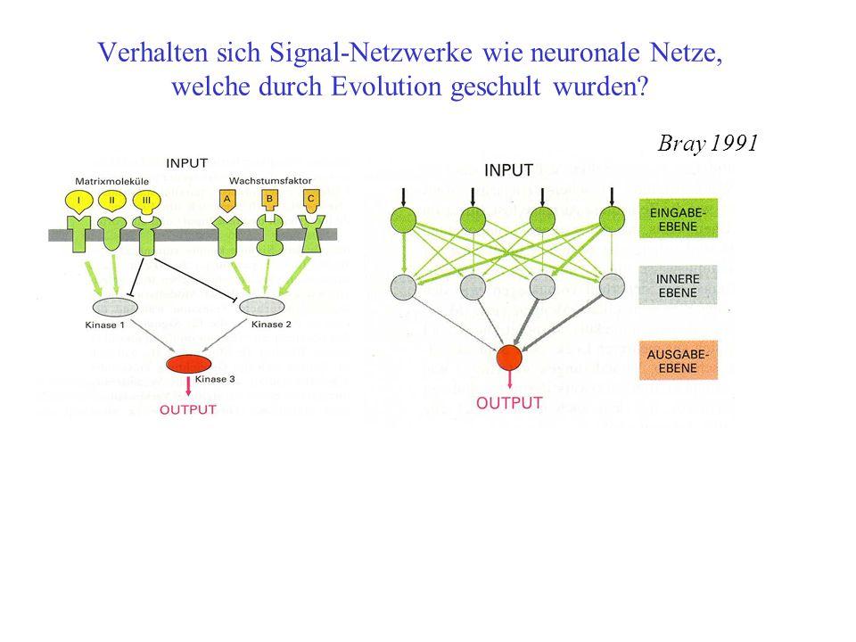 Verhalten sich Signal-Netzwerke wie neuronale Netze, welche durch Evolution geschult wurden? Bray 1991