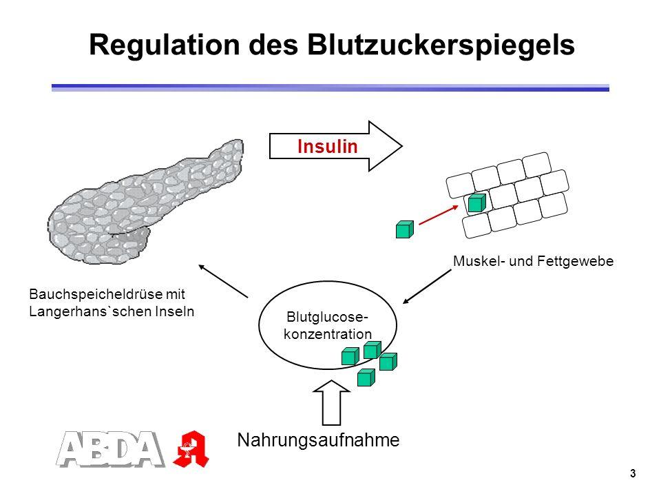 3 Bauchspeicheldrüse mit Langerhans`schen Inseln Insulin Muskel- und Fettgewebe Blutglucose- konzentration Nahrungsaufnahme Regulation des Blutzuckers
