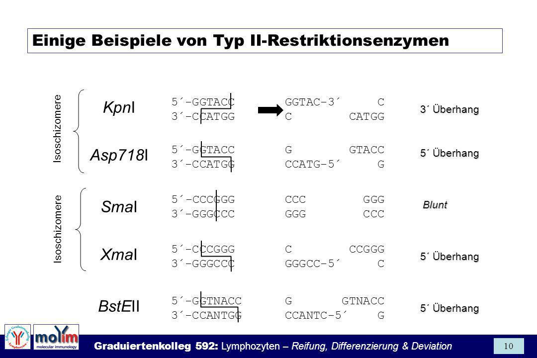 Graduiertenkolleg 592: Lymphozyten – Reifung, Differenzierung & Deviation 10 KpnI 5´-GGTNACC G GTNACC 3´-CCANTGG CCANTC-5´ G 5´-GGTACC GGTAC-3´ C 3´-C