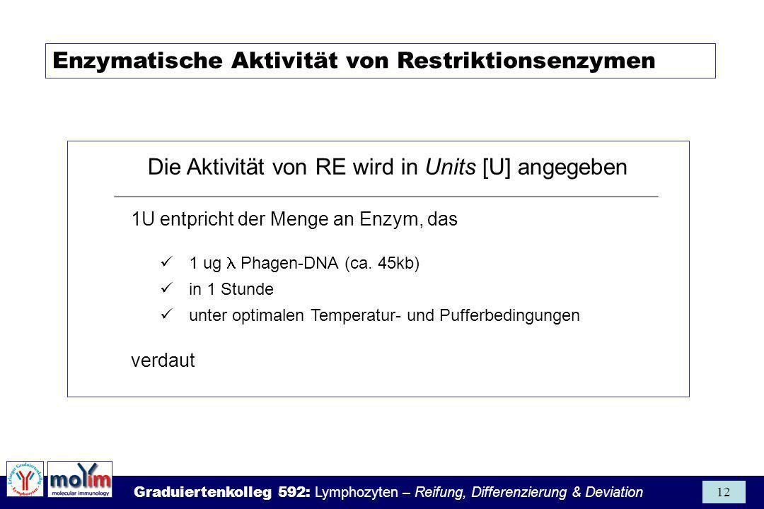 Graduiertenkolleg 592: Lymphozyten – Reifung, Differenzierung & Deviation 12 Enzymatische Aktivität von Restriktionsenzymen Die Aktivität von RE wird