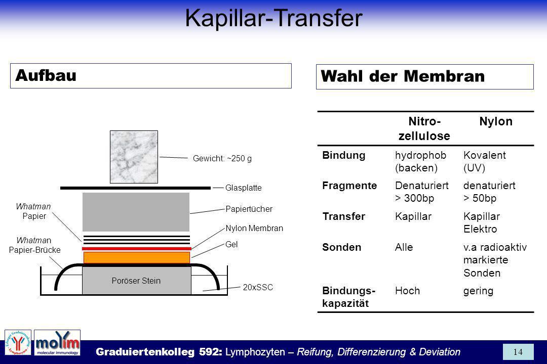Graduiertenkolleg 592: Lymphozyten – Reifung, Differenzierung & Deviation 14 Glasplatte Nylon Membran Papiertücher Whatman Papier Gewicht: ~250 g Gel