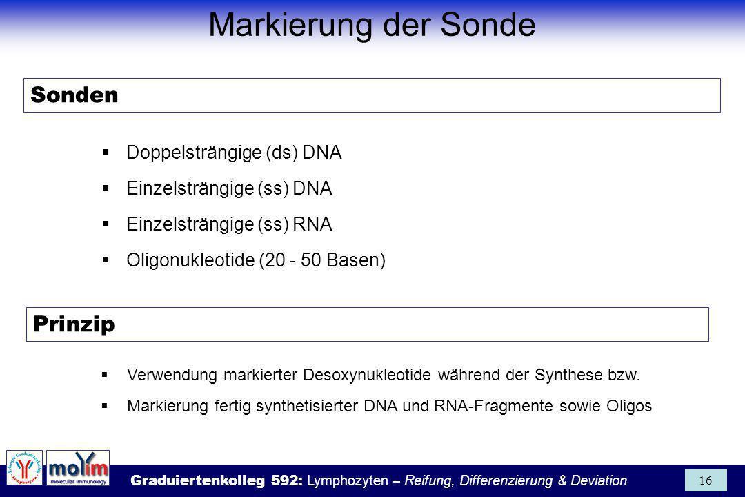 Graduiertenkolleg 592: Lymphozyten – Reifung, Differenzierung & Deviation 16 Sonden Doppelsträngige (ds) DNA Einzelsträngige (ss) DNA Einzelsträngige