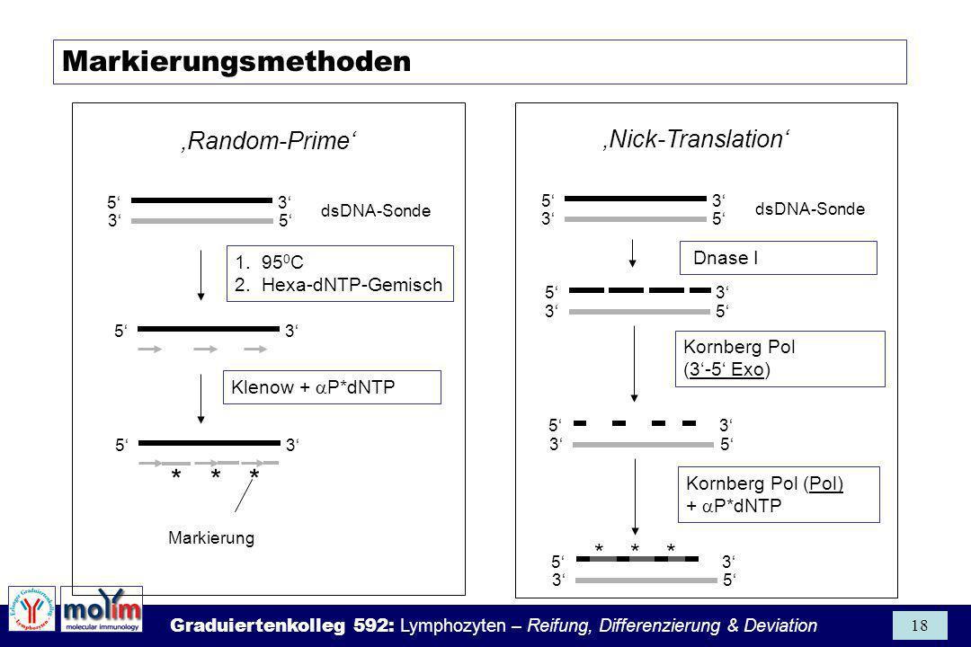 Graduiertenkolleg 592: Lymphozyten – Reifung, Differenzierung & Deviation 18 * * * 5 3 Nick-Translation Random-Prime Markierungsmethoden 3 5 dsDNA-Son