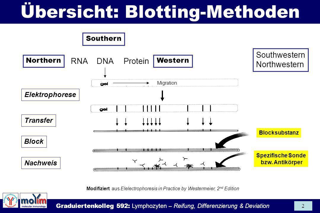 Graduiertenkolleg 592: Lymphozyten – Reifung, Differenzierung & Deviation 2 Modifiziert aus Elelectrophoresis in Practice by Westermeier, 2 nd Edition