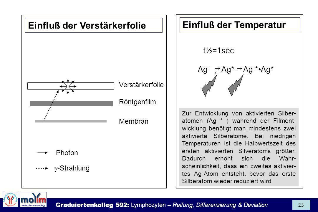 Graduiertenkolleg 592: Lymphozyten – Reifung, Differenzierung & Deviation 23 Photon Ag + Ag* Ag *Ag* t½=1sec Zur Entwicklung von aktivierten Silber- a
