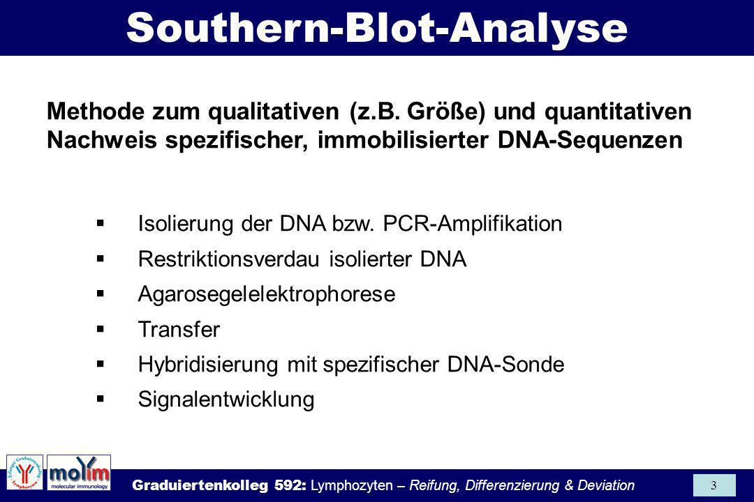 Graduiertenkolleg 592: Lymphozyten – Reifung, Differenzierung & Deviation 3 Methode zum qualitativen (z.B. Größe) und quantitativen Nachweis spezifisc
