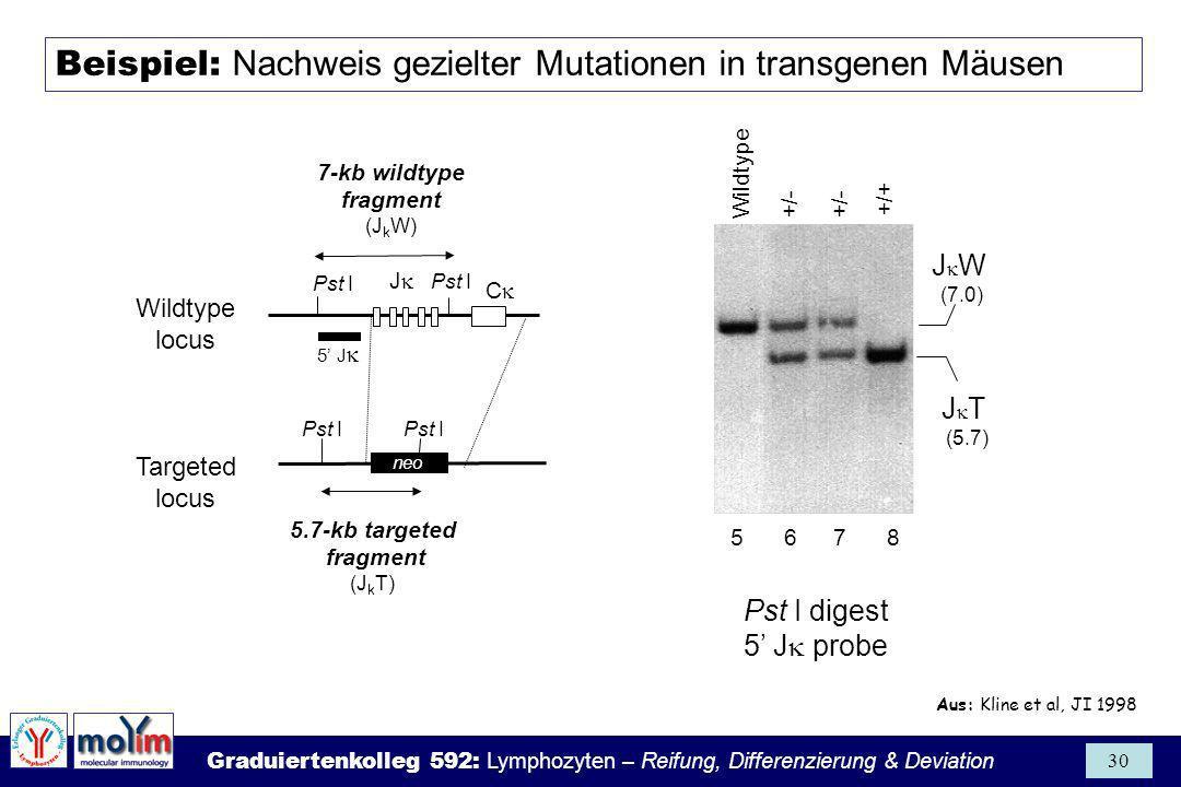 Graduiertenkolleg 592: Lymphozyten – Reifung, Differenzierung & Deviation 30 J C 5 J Pst I 7-kb wildtype fragment (J k W) Pst I 5.7-kb targeted fragme