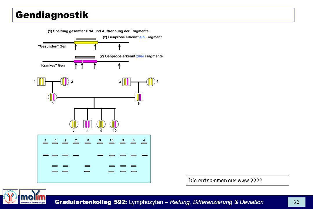 Graduiertenkolleg 592: Lymphozyten – Reifung, Differenzierung & Deviation 32 Gendiagnostik Dia entnommen aus www.????