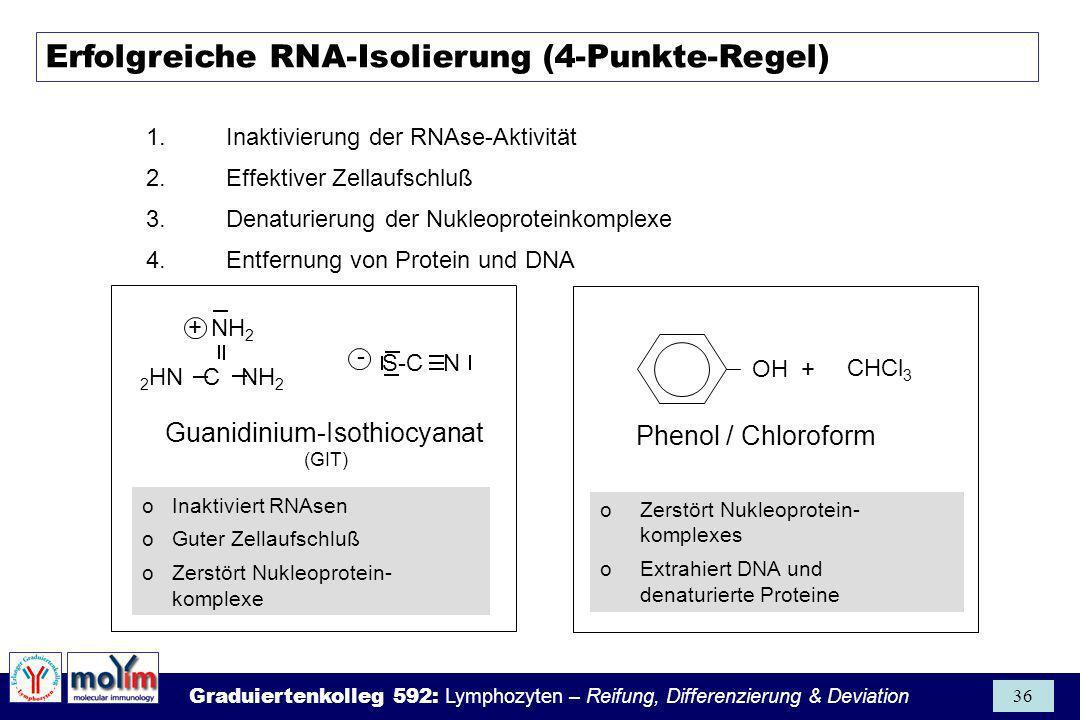 Graduiertenkolleg 592: Lymphozyten – Reifung, Differenzierung & Deviation 36 Erfolgreiche RNA-Isolierung (4-Punkte-Regel) 1.Inaktivierung der RNAse-Ak