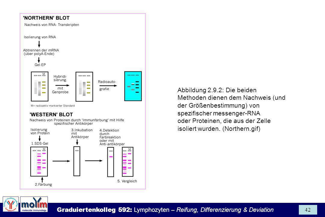 Graduiertenkolleg 592: Lymphozyten – Reifung, Differenzierung & Deviation 42 Abbildung 2.9.2: Die beiden Methoden dienen dem Nachweis (und der Größenb