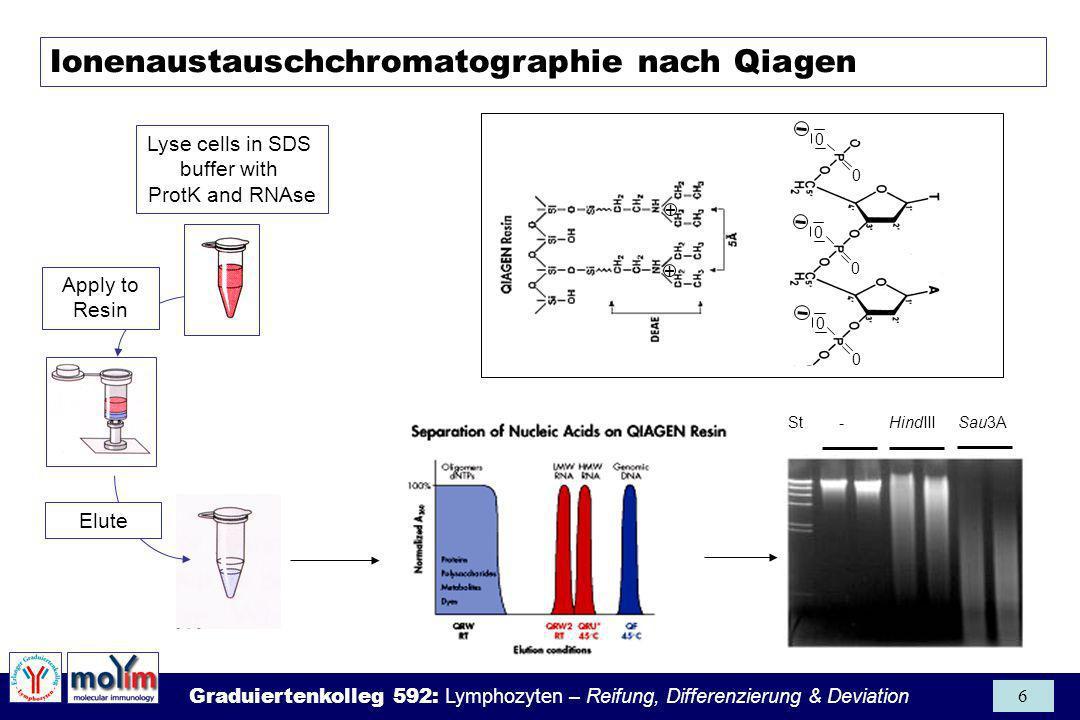 Graduiertenkolleg 592: Lymphozyten – Reifung, Differenzierung & Deviation 7 QuelleDNA (mg) 1 Säugetierzelle: 5 10 -12 (= 5 pg) 10 6 kultivierte Zellen : 2.5-10 10 mg Maus-Leber: 10-15 300ml Blut:1-10 Ausbeuten