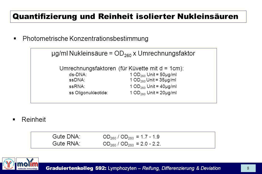 Graduiertenkolleg 592: Lymphozyten – Reifung, Differenzierung & Deviation 39 Isolierung von Kern-RNAmRNA-Isolierung - TTTTTT AAAAAA cap mRNA Oligo-dT Zellen mit nicht-ionischen Detergenz aufschließen Kerne über Sucrose- gradienten aufreinigen RNA über GIT-Methode und CsCl-Gradienten aufreinigen Zellen mit GIT aufschließen Affinitätschromatographie an oligo(dT)-Matrix Sepharose, Cellulose oder Magnet.